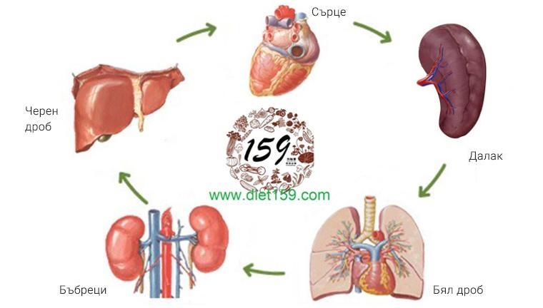 Основни органи диета 159